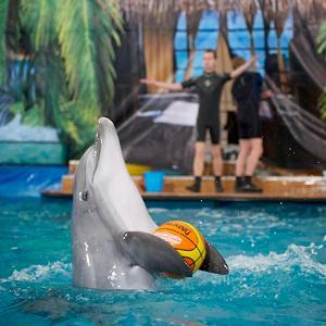 Дельфинарии, океанариумы Верхнебаканского