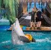 Дельфинарии, океанариумы в Верхнебаканском